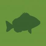 Takkusalmen kalasatama